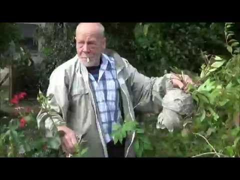 Hvordan fjerner man et hvepsebo i en busk? http://www.hvepsefjerner.dk