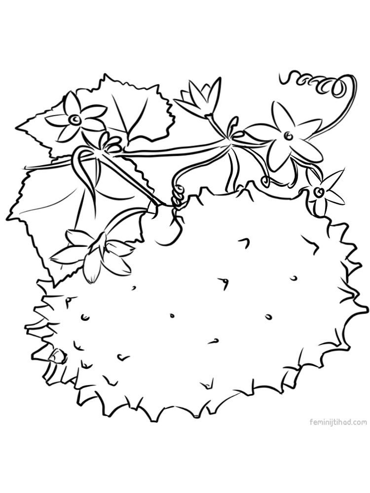 Kiwano Images For Coloring Page Kiwano Or Known As Horned Melon Thorny Cucumber Is A Fruit That Fruit Coloring Pages Coloring Pages Coloring Pages To Print
