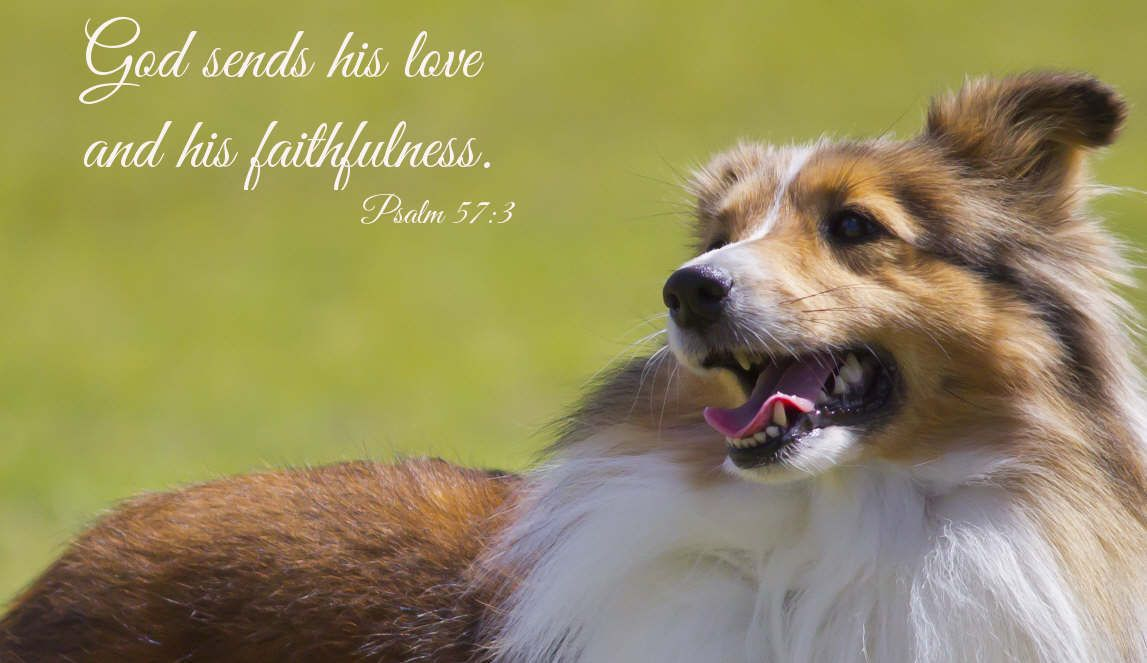 God sends his love and his faithfulness. | Happy dogs, Dog ...
