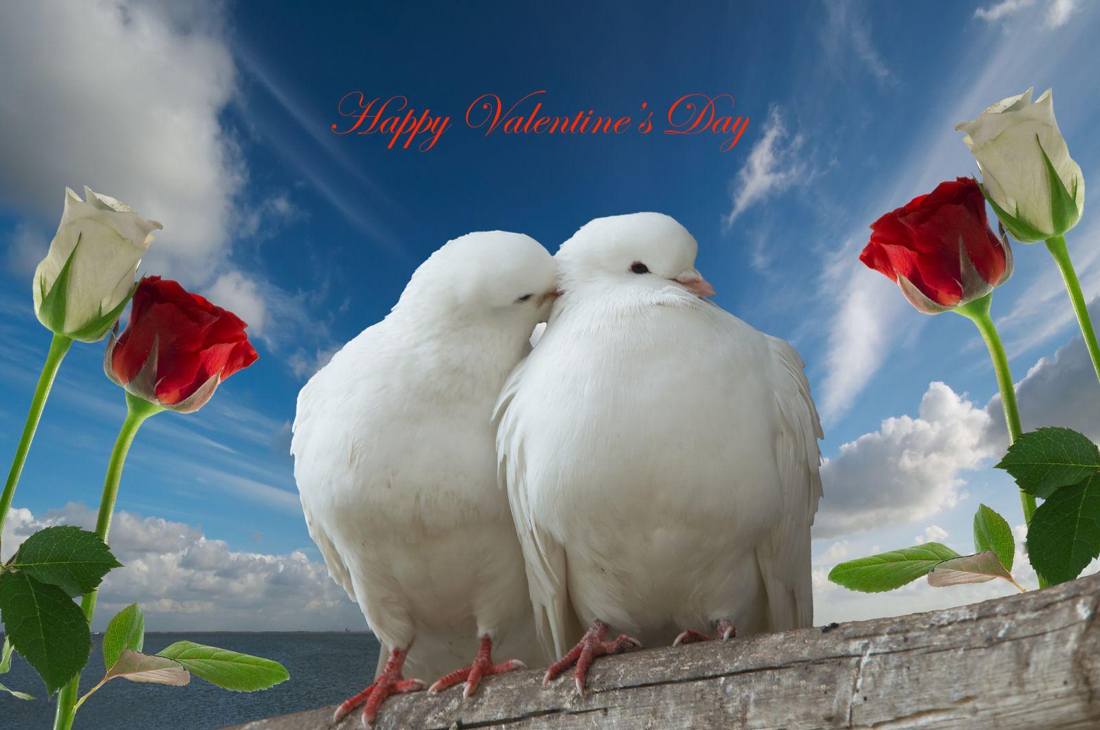 Happy Valentine S Day From All Of Us At Optics4birding In 2020 Cute Birds Beautiful Birds Beautiful Bird Wallpaper
