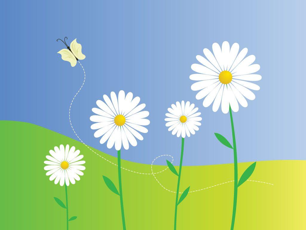 Daisy Flowers Vector Illustrations Pinterest Illustration