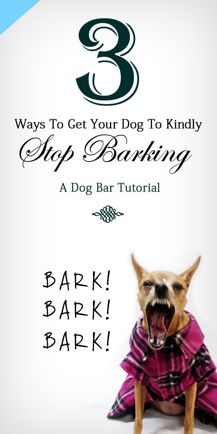 how to naturally get a dog to stop barking