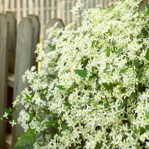 Die schönsten weißen Blumen für Ihren Garten | Garten, Plants and ...
