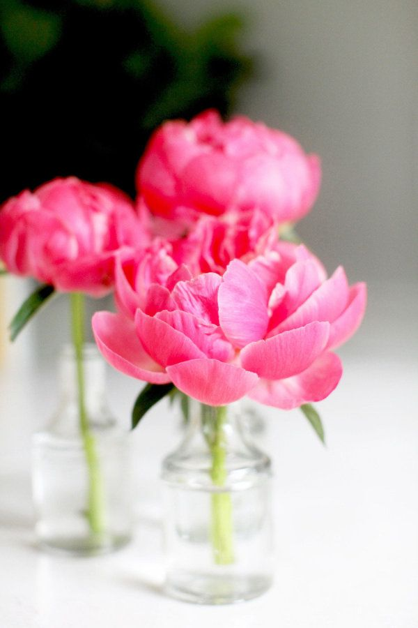 Diy Flower Arrangement Peonies 3 Ways Deko Moodboards