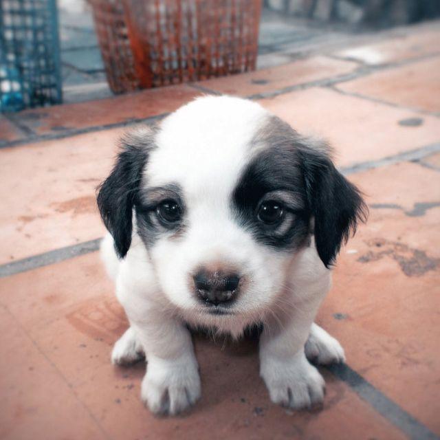 Wide Eyed Puppyyyy Reddit Com Cute Animals Pets Animals