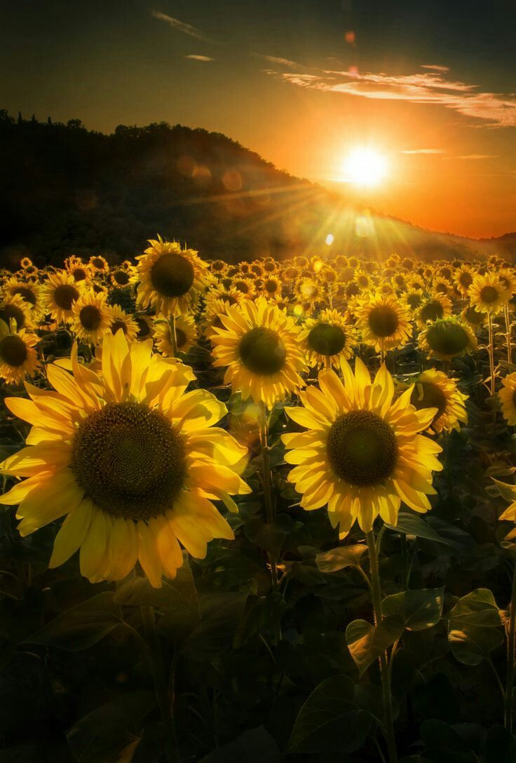 Field Of Flowers Quotes