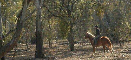 Riding My Brumby At Barmah National Park National Parks Tree Trunk Tree