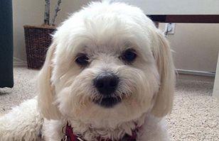 Seguro te contagias: Alégrate con las mejores sonrisas de perros | Virales