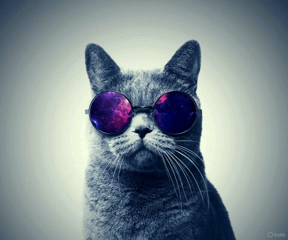 Glass,cat,hipster