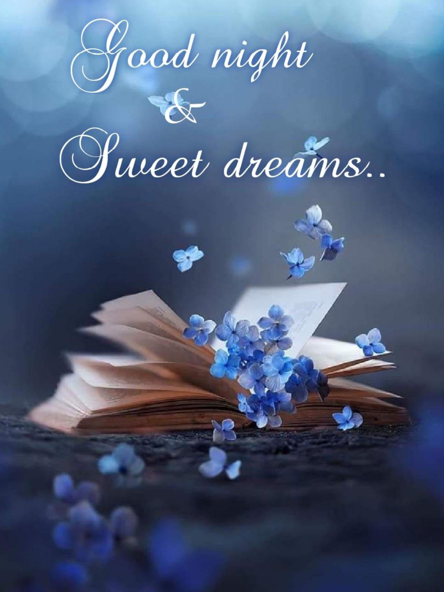Goodnight 😴 Sleep Well. 🙏🕊   Cute good night quotes, Beautiful good  night images, Good night wishes