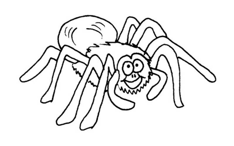 Tarantula Coloring Pages Best Coloring Pages For Kids Spider Coloring Page Animal Coloring Pages Hulk Coloring Pages
