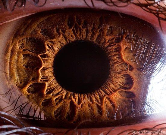 Extreme Close Ups Of Eyeballs By Suren Manvelyan Auge Nahaufnahme Augen Fotografie Augen