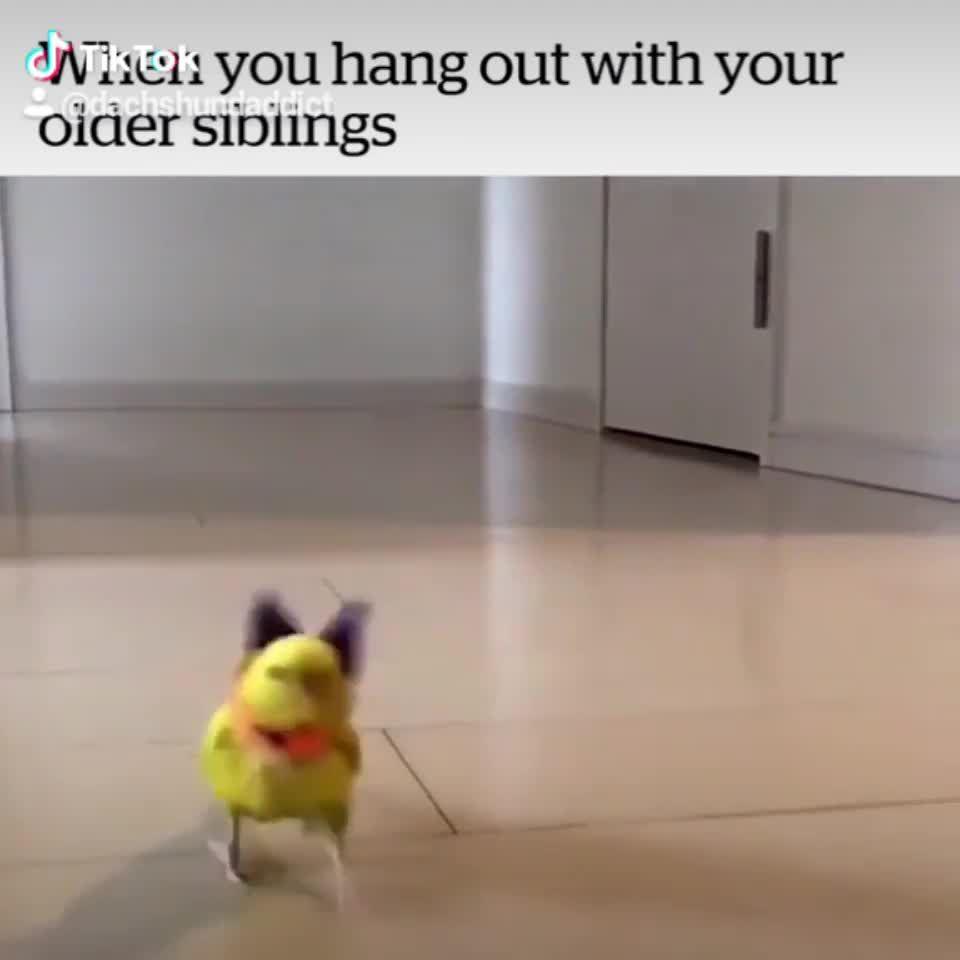 Photo of Dachshund Dog Meme