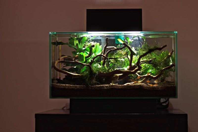 fluval edge planted - Google Search   Aquascape   Goldfish ...