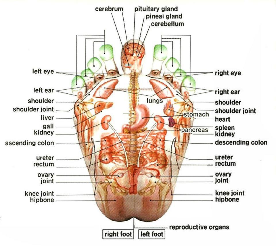 Reflexology reflexology pressure points on feet for the body foot reflexology chart pooptronica