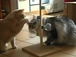 Katzenspielzeug Selber Machen Google Suche Katzen Spielzeug Katzenspielzeug Katzenspielzeug Selber Machen