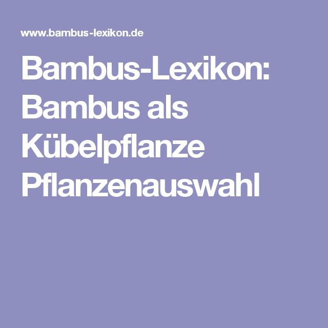 Inspirational Bambus Lexikon Bambus als K belpflanze Pflanzenauswahl