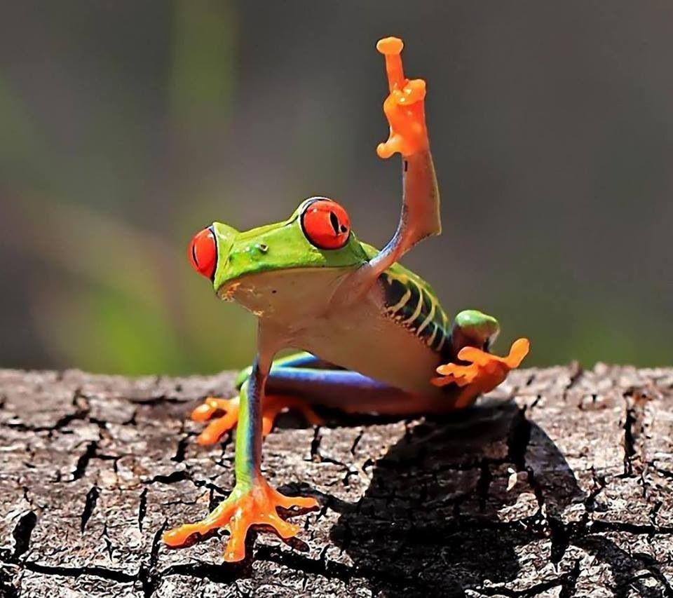 Smart frog .