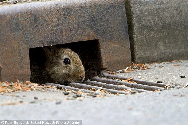 Clever animals cross road in hidden tunnel to avoid being flattened by  traffic