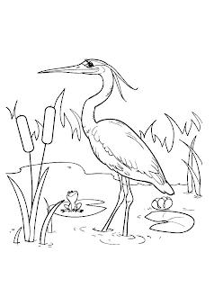 Mewarnai Gambar Burung Bangau Aneka Gambar Mewarnai Mewarnai