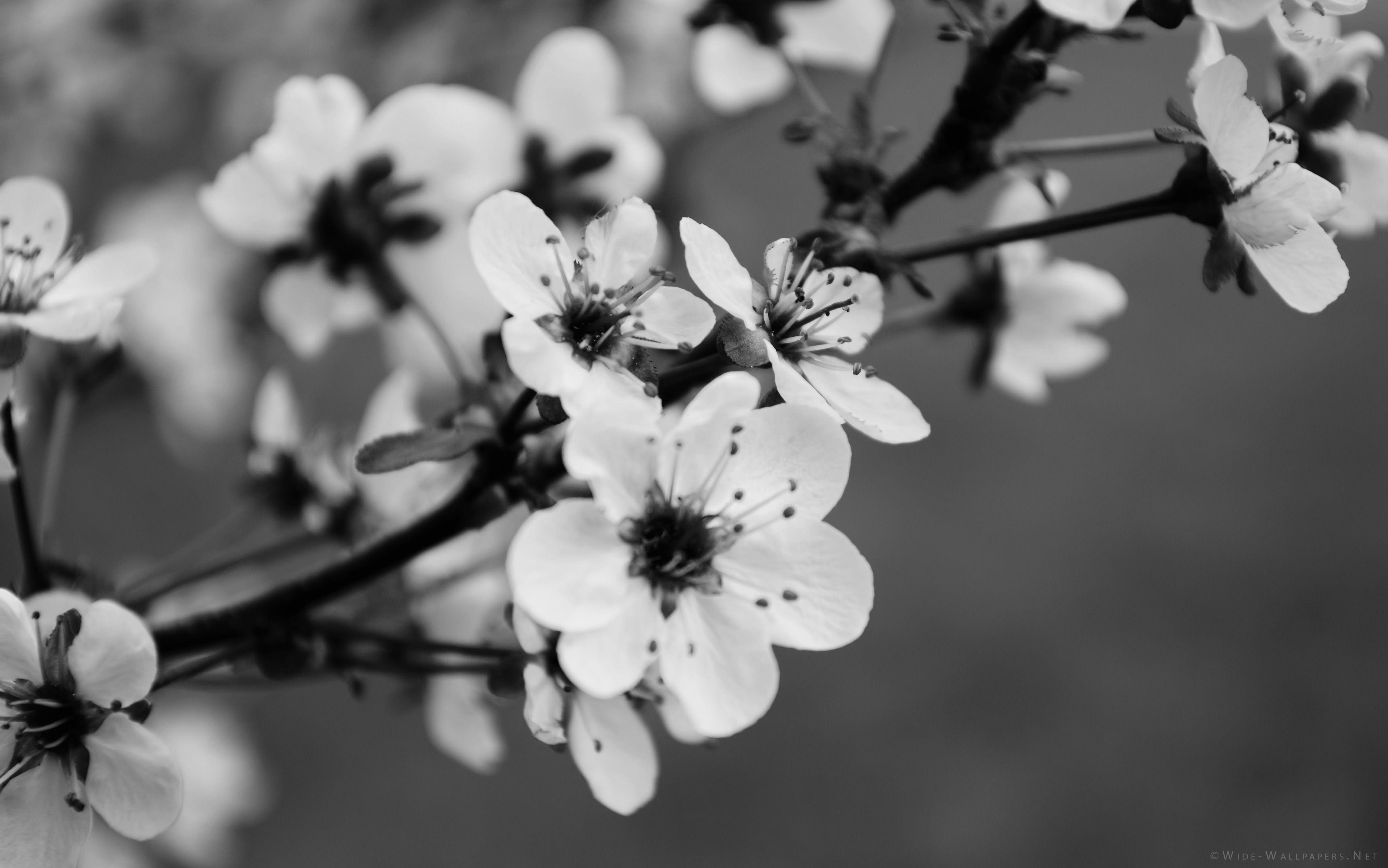 Поздравлением, черно-белые открытки природа