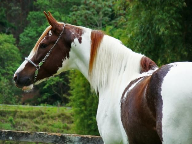 Pin by Tracy Fulton on Multi Color Horses VII | Horses