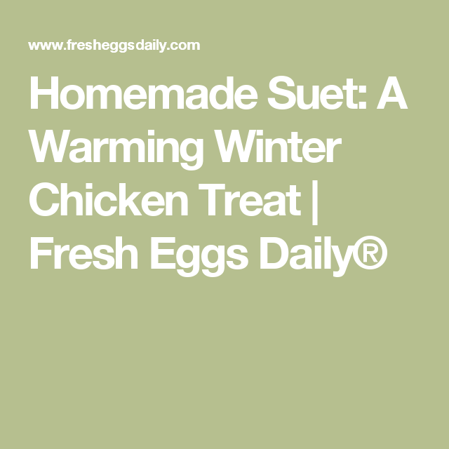 Homemade Suet Cakes: A Warming Winter Chicken Treat