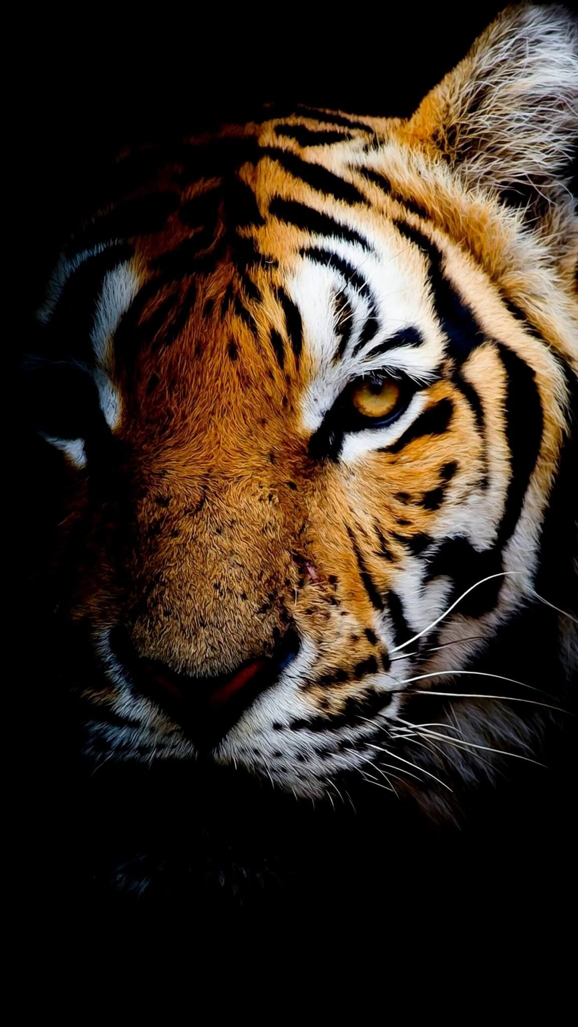 50 Mobile Wallpaper Inspiration For Those In Need Of A Change Mobile Wallpaper Tiger Wallpaper Iphone Animal Wallpaper