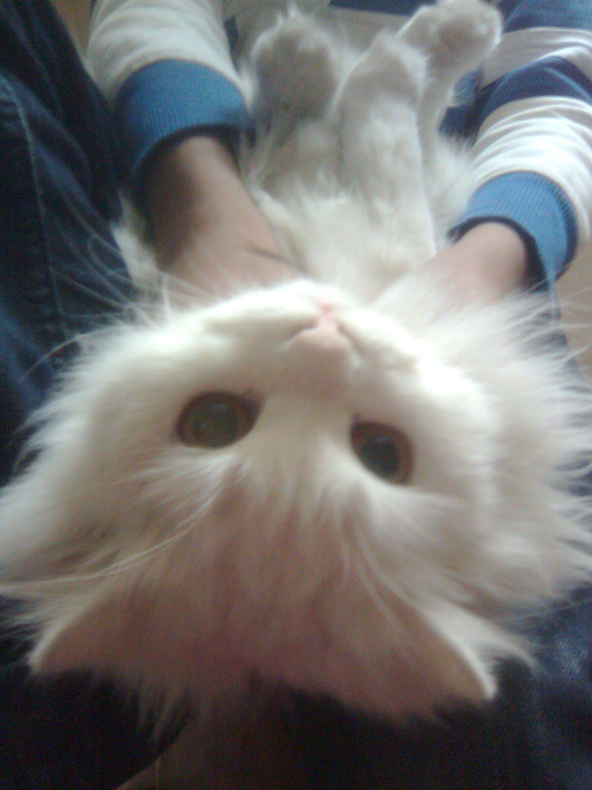 cute silly cat .. !