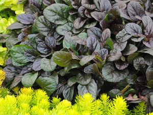 Good Ground Cover Plants