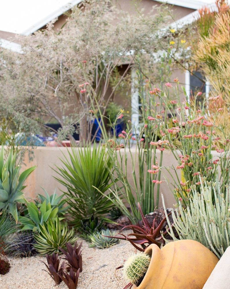 Low Water Succulent Garden By Singing Gardens Landscape Designer Jpg