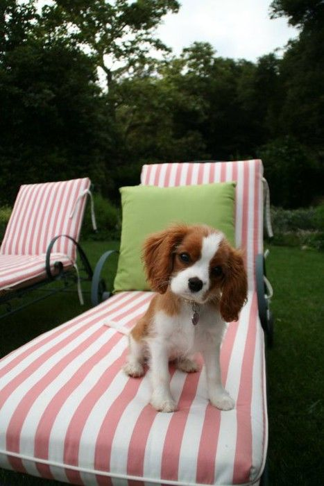 Dog + pink/green chaises