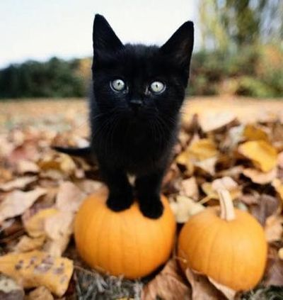Halloween - black kitten with pumpkins and autumn leaves