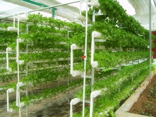 Hydroponics Growing System For Green Vegetables In Agricultural Greenhouse Aquaponics Hydroponics Hydroponic Gardening Aquaponics Aquaponics System
