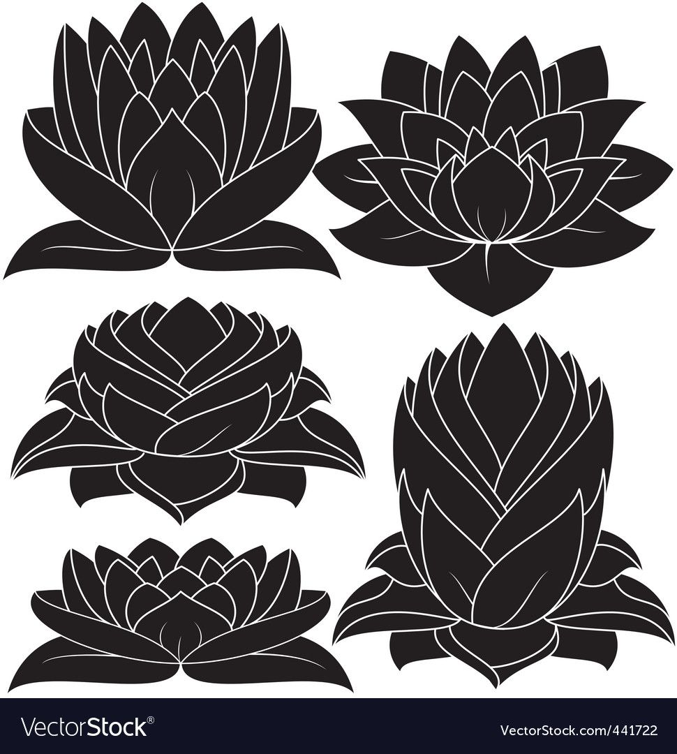 Lotus flower Royalty Free Vector Image VectorStock , AD