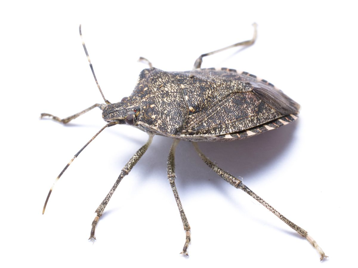 Types of Bugs with Pictures and Names (How to Prevent Bugs In House ...