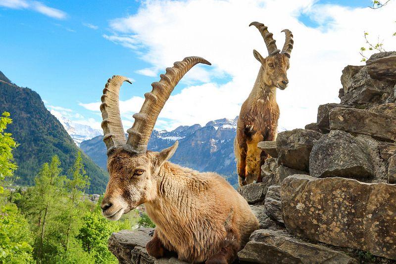المعالم السياحية في انترلاكن سويسرا وايلد بارك