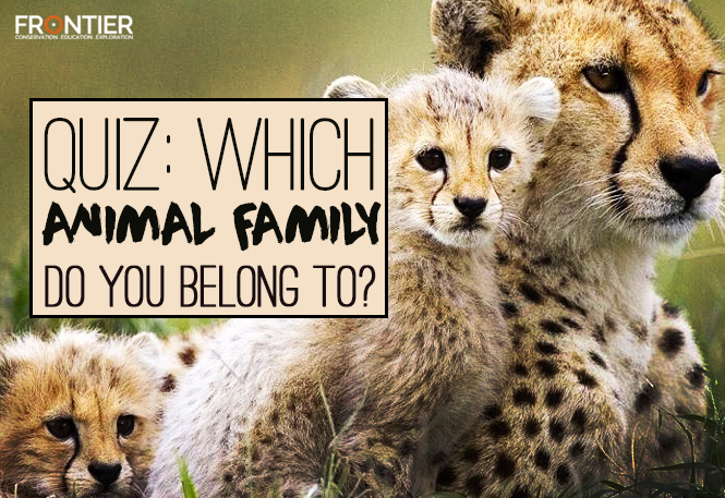 QUIZ: Which Animal Family Do You Belong To? | blog
