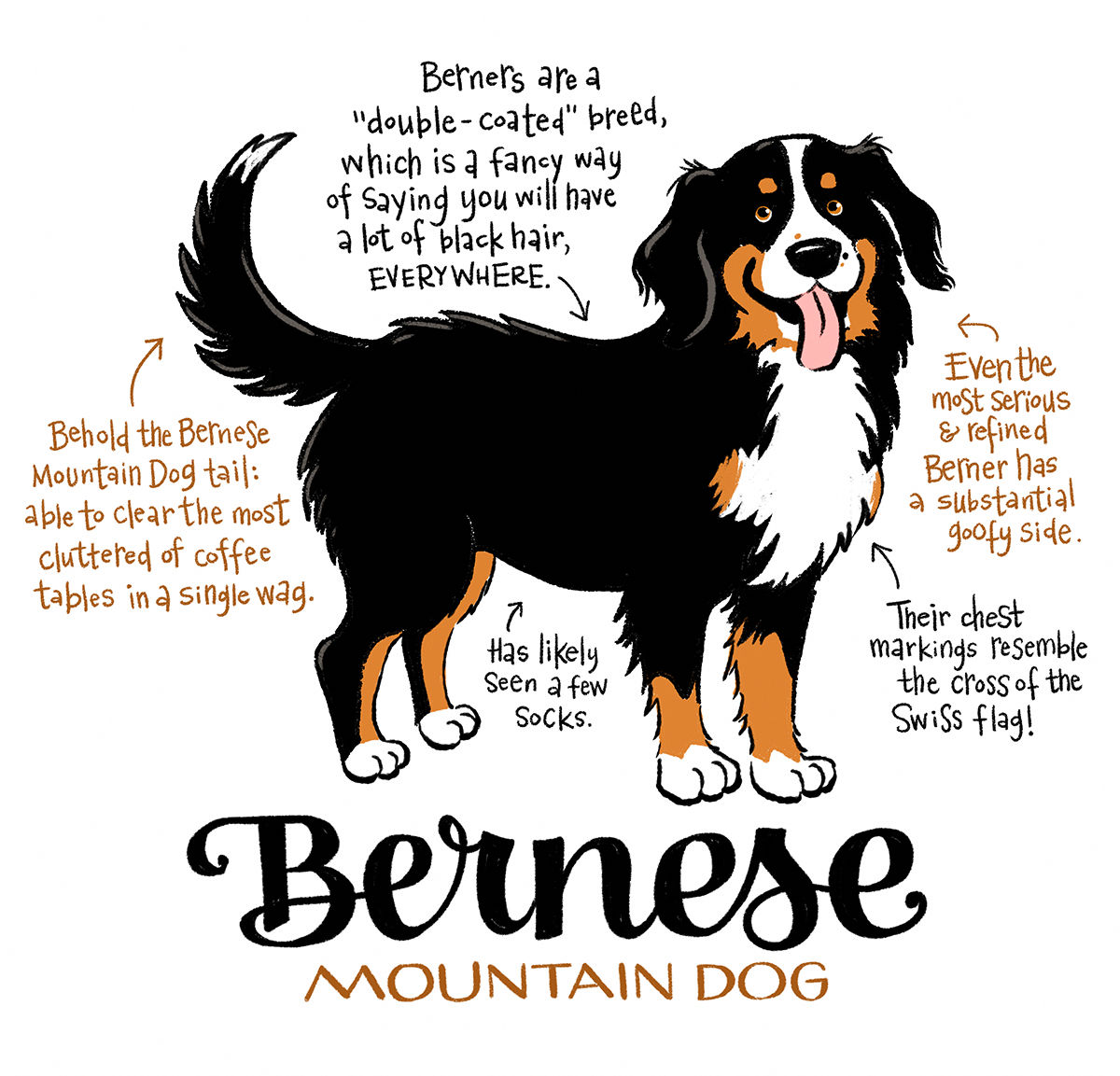 Image Result For Bernese Mountain Dog Burmese Mountain Dogs Mountain Dogs Burnese Mountain Dog