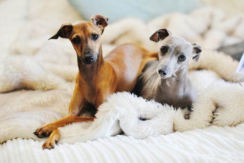 animal, animals, and dogs -kuva