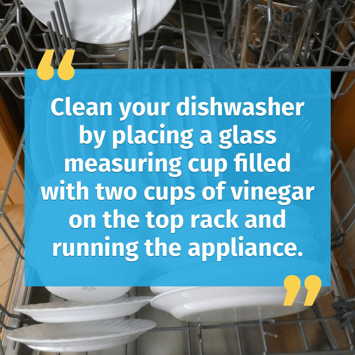 Quickly Rid Your Dishwasher Of Harmful Bacteria With This