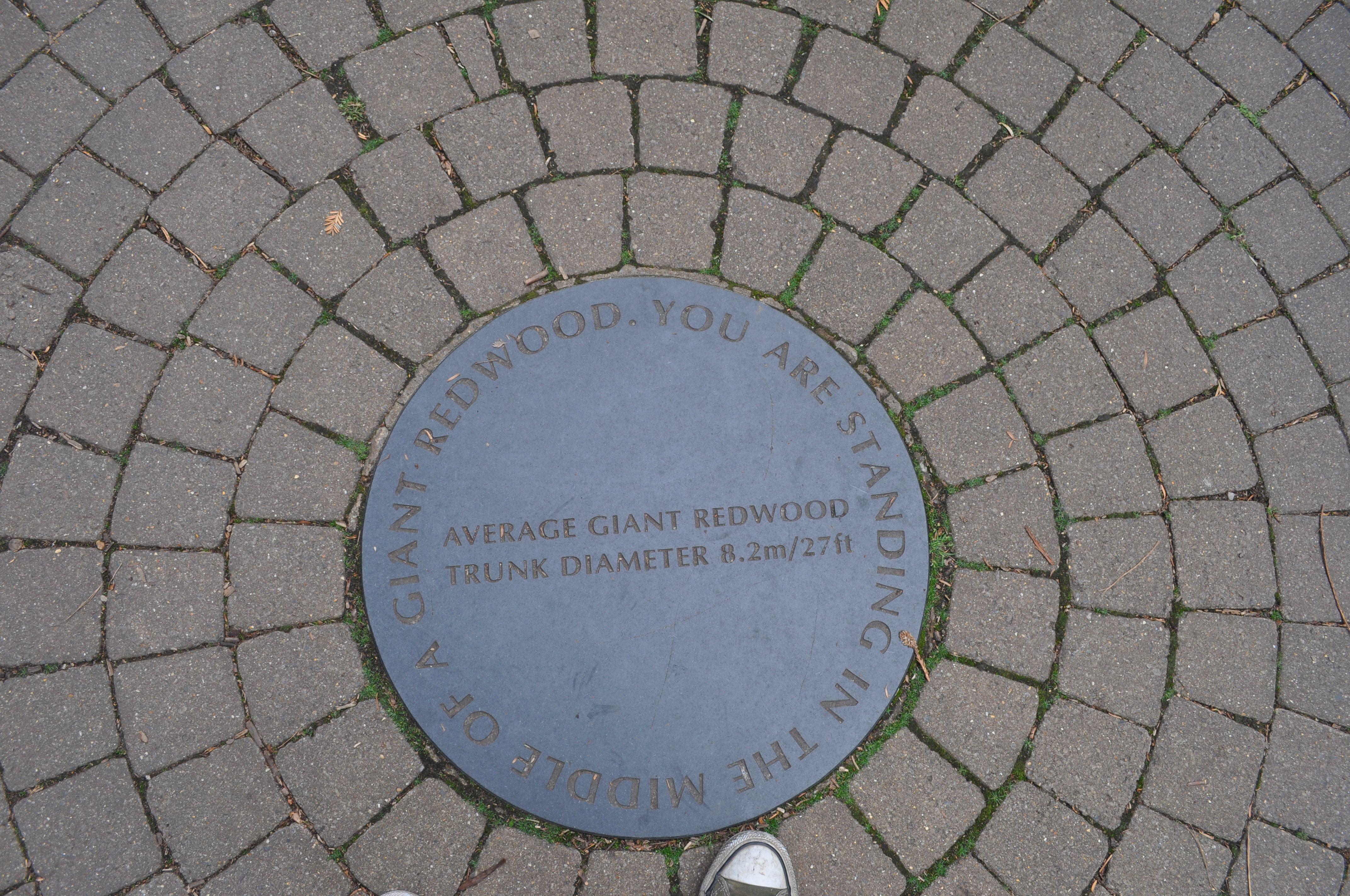 ÄLYMETSÄ on paikka, jossa voi kulkea pitkin erilaista luontopolkua. Polulle asetetut infotaulut kertovat kasvien ihmeellisista kyvyistä ja ominaisuuksista. Esimerkiksi: Verrataan puita ihmisen rakentamiin pilvenpiirtäjiin - suhteessa yhtä korkea ja kapea pilvenpiirtäjä ei voisi pysyä pystyssä. Taulun QR-koodi antaa lisää tietoa aiheesta. Kuvan aukio sijaitsee Lontoon Kew Gardenissa.