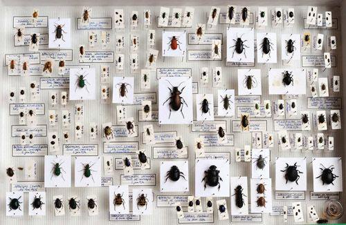deyrolle entomologie vente d 39 insectes et de papillons moodboard pinterest sammlung. Black Bedroom Furniture Sets. Home Design Ideas