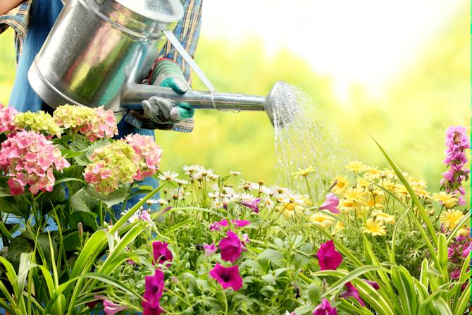 5 Reasons to Take Up Gardening!