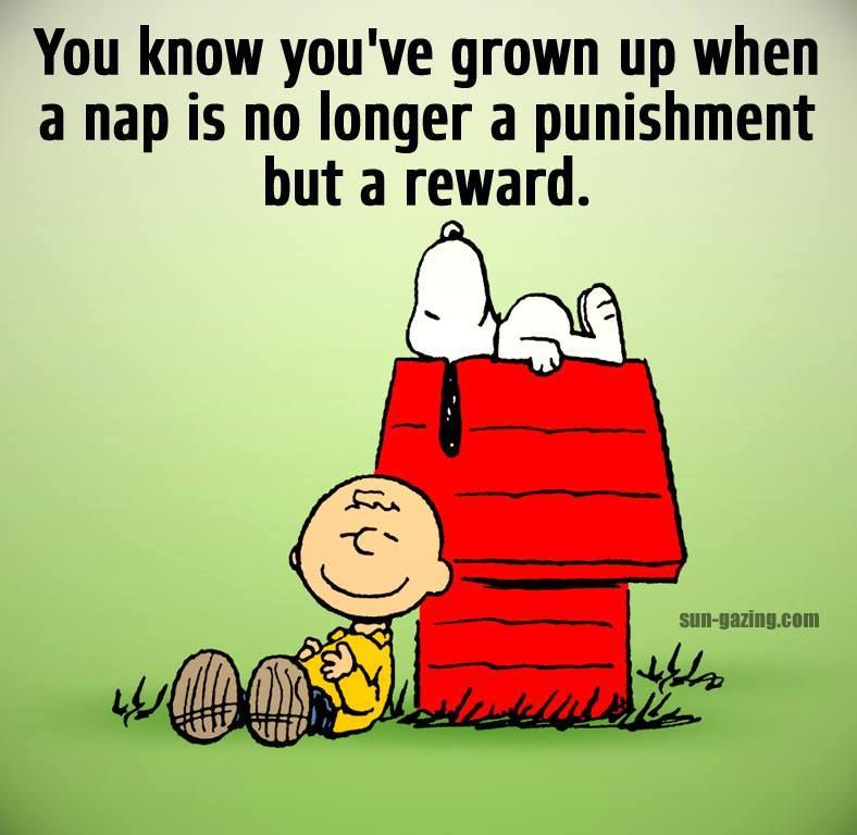 Image result for nap quotes ziggy