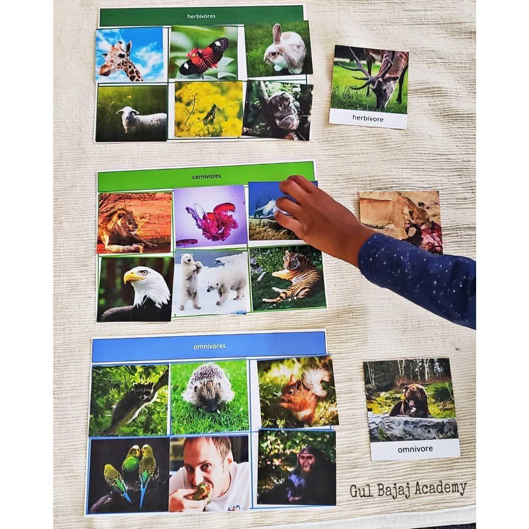 Sorting The Animals In Categories Herbivore Carnivore