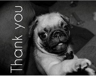 On Behalf Of Dfw Pug Rescue Thank You For Participating In The