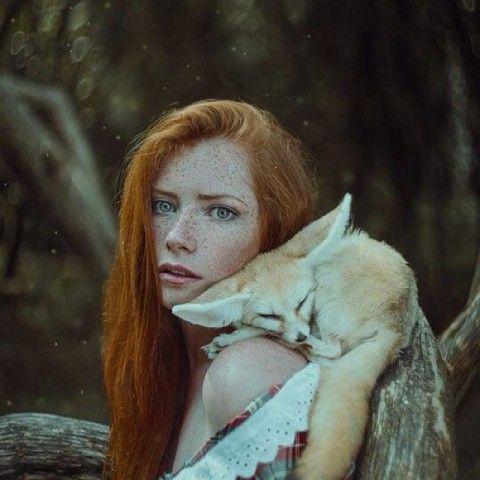 Gingerphelia