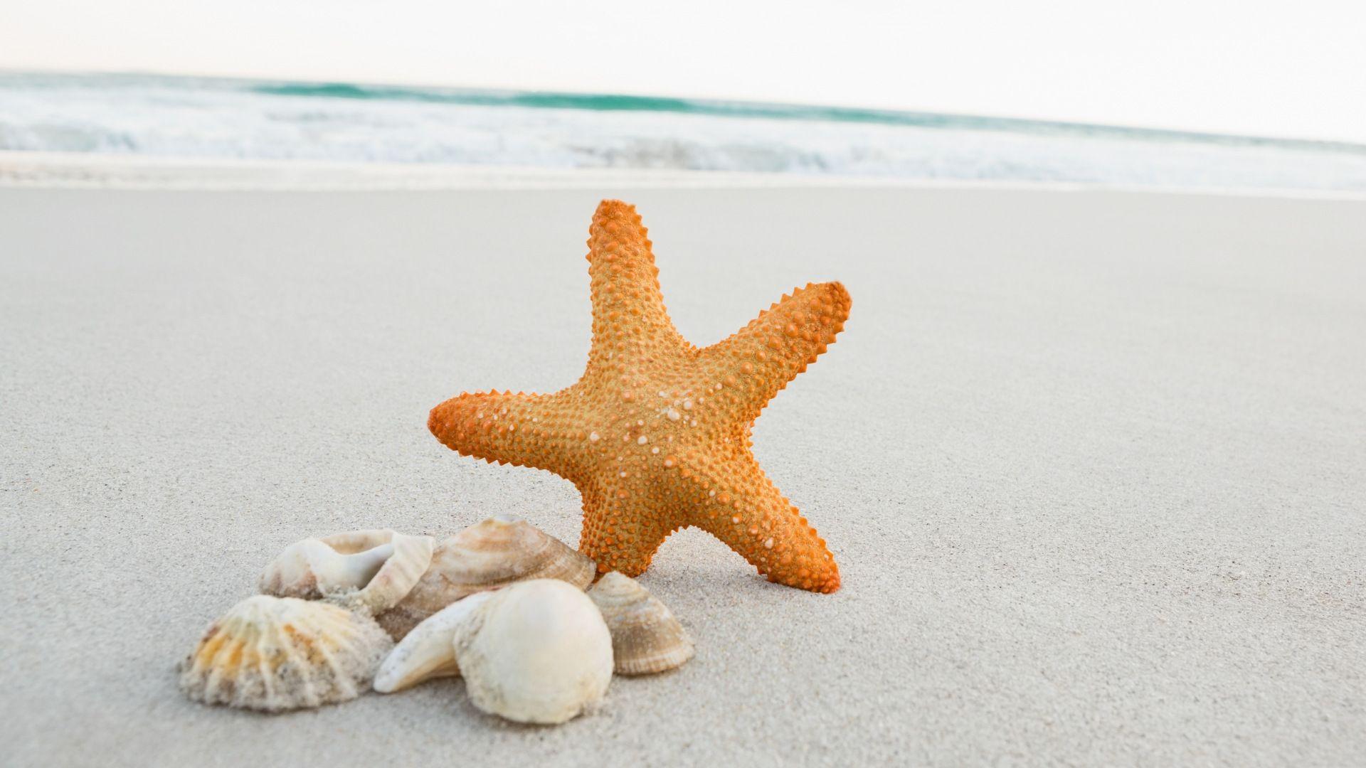 Starfish And Seashell At Beach 1920x1080 Sea Shells Investment Banking Starfish