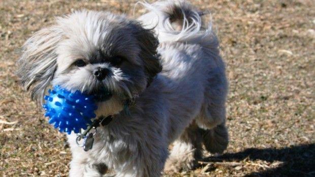Denver Dog Parks - Denver Pet Grooming | Dog park, Dogs, Pets